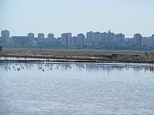 Птицы на Атанасовском озере, на заднем плане — Бургас