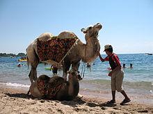 Фотограф с верблюдом на пляже (2006 год)