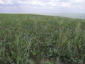 Степная растительность на берегу озера Ульжай.