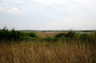 Дитвянское болото