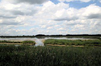 Докудовское болото