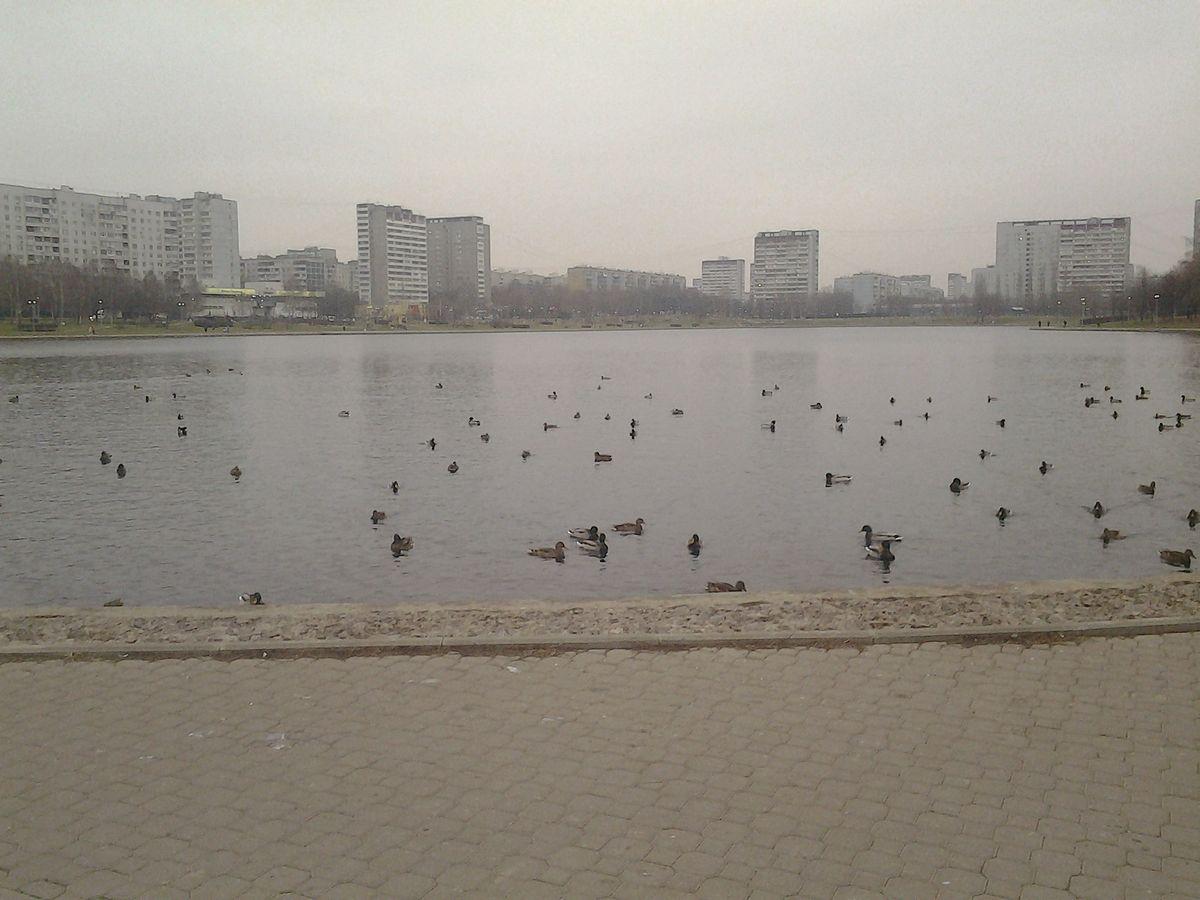 Гольяновский пруд (Москва)