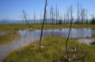 Кулиные болота