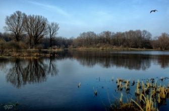 Лесное (озеро