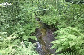 Оленьи пруды