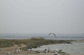 Панское (озеро)
