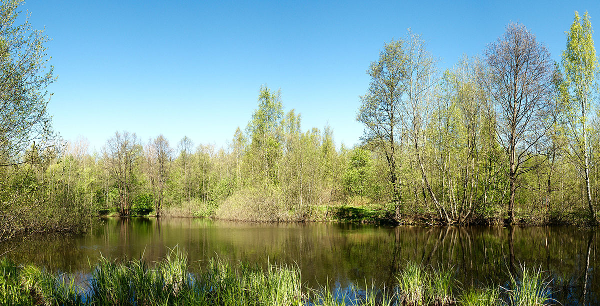 Петровский пруд (Приморский район)