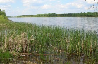 Пинские болота