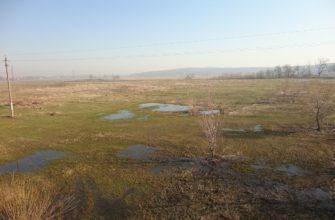 Романовское болото (памятник природы)